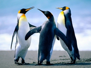 penguins.jpg